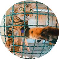 pensione-gatti-sicura