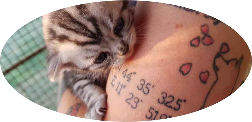 pensione-gatti-soggiorno