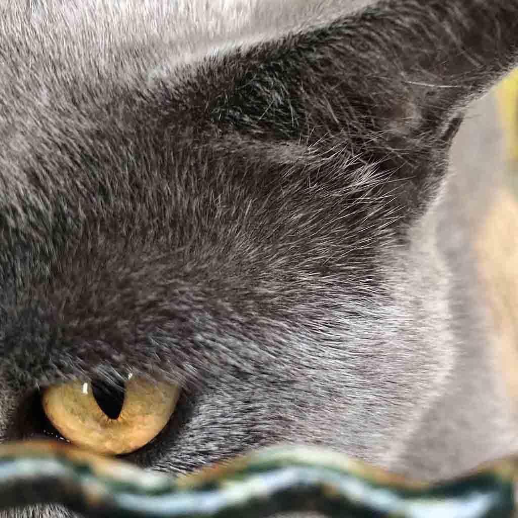 pensione-gatti-zona-notte